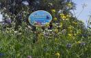 Blühwiese der Naturheilpraxis Tapken_11
