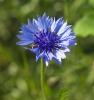 Blühwiese der Naturheilpraxis Tapken_9